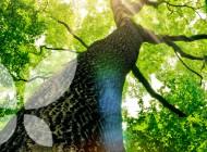 Intégralité et Réconciliation